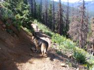 Leah and Draco on Gunnison National Forest 531, some beetle killed spruce evident