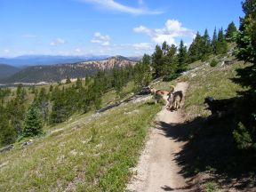 Leah and Draco on Gunnison National Forest Trail No. 531, west of Mount Peck