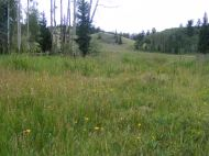A view of the big meadow where I stopped and had lunch