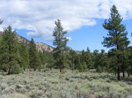 Sagebrush flats studded with ponderosa pine, on the Independence Gulch Trail No. 234