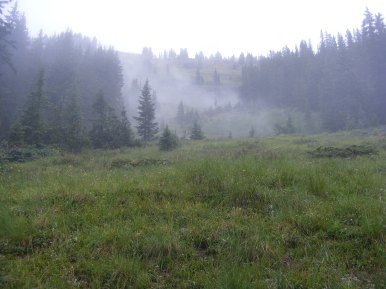 Misty day hiking in the Fossil Ridge area