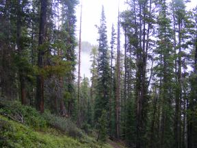 Cloudy day hiking in Fossil Ridge
