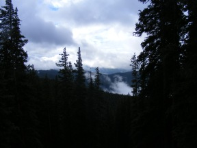 Looking out over a cloudy forest