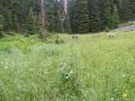 Draco and Leah in a meadow southeast of Boulder Lake, along the Fossil Ridge Trail No. 478