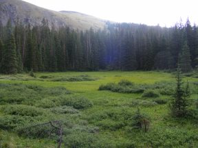 A meadow south of Boulder Lake