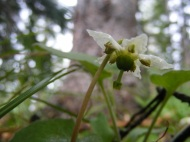I didn't want to bend the flower upwards against its natural inclination, so instead I tried to take a upwards snapshot