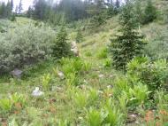 Typical wildflower garden found near Boulder Lake, spruce in abundance. Draco partially hidden behind one small tree