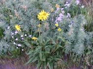A sampling of wildflowers on West Brush Crek