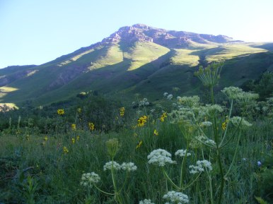 Teocalli Mountain rising above wildflowers on West Brush Creek
