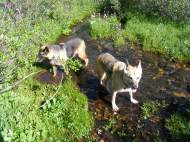 A small spring-fed stream that adds to West Brush Creek, Leah and Draco cooling off
