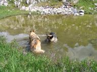 Draco and Leah cooling off in a small pond on West Brush Creek