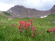Looking past the Castilleja spp. up towards Point 13162, above Twin Lakes