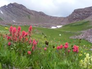 Tundra and alpine wildflower extravaganza above Twin Lakes in the Elk Mountains of Colorado
