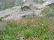 Wildflowers galore in the basin above Twin Lakes