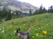 Leah and wildflowers on the Twin Lakes Trail No. 402