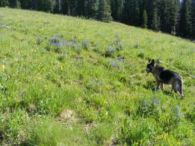 Leah rambling through wildflowers