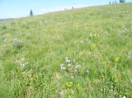 Grassy meadow strewn with wildflowers