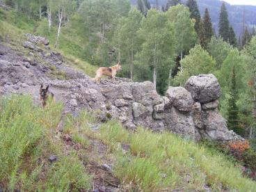 Leah idle as Draco stands on a small outcropping of West Elk breccia