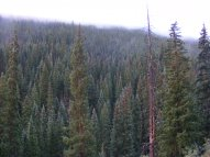 The vast forest on the northwest slope of Carbon Peak, under a layer of cloud