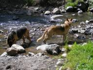 Leah and Draco wading in Mill Creek