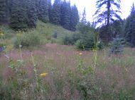 Typical vegetation on Three Forks Creek