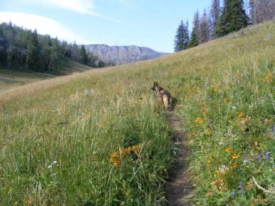 Leah on Bridger-Teton National Forest Trail No. 94, near the pass that leads to Roaring Fork Basin
