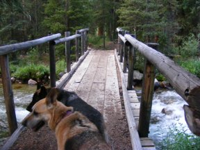 Draco and Leah on the bridge over Roaring Fork, Bridger-Teton National Forest Trail No. 94