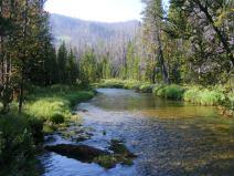 Roaring Fork flowing by placidly between banks of verdure