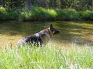 Leah wading in Roaring Fork