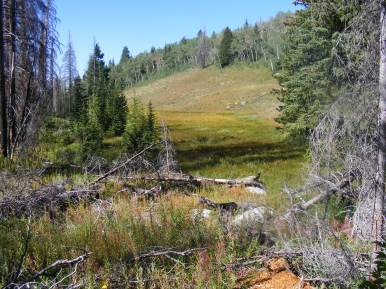 A small meadow at the divide between the Green River and the Roaring Fork