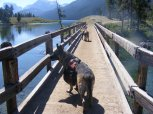 Leah and Draco crossing the Green River on Bridger-Teton National Forest Trail No. 94