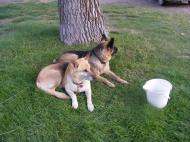 Draco and Leah at camp in the Lucerne Valley Campground