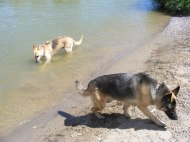 Draco and Leah at play in the Gunnison River near Delta, Colorado