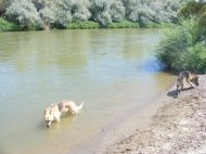 Draco and Leah on a beach adjacent to the Gunnison River near Delta