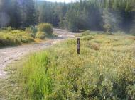 The beginning of the hike, on Gunnison National Forest Road 769
