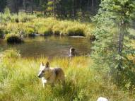 Draco and Leah in a beaver pond on South Quartz Creek