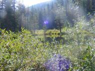 Another beaver pond on South Quartz Creek