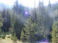 Morning Sun streaking through the forest on South Quartz Creek
