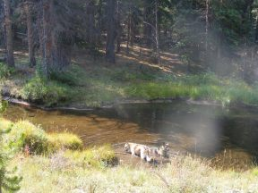 Draco and Leah lapping up some of South Quartz Creek