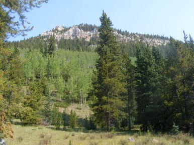 Aspen grove on South Quartz Creek