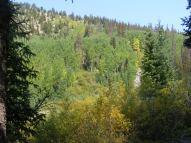 Aspen above South Quartz Creek