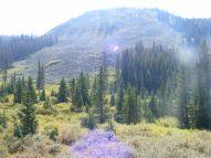 Subalpine splendor on South Quartz Creek