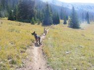 Leah and Draco on South Quartz Trail No. 483
