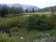A pond in Brittle Silver Basin