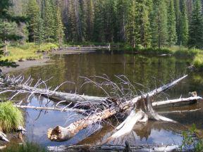 A beaver pond on Middle Quartz Creek