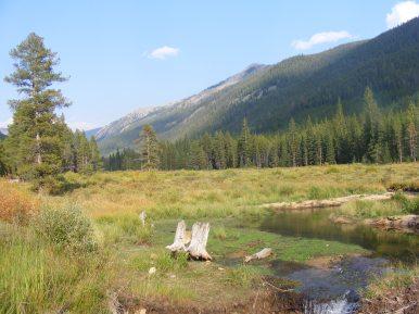 Meadow on Middle Quartz Creek