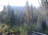 Sunlight illuminating the conifer in Union Canyon