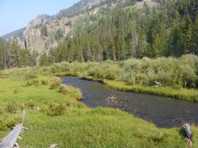 Lottis Creek flowing through a nice meadow in Union Canyon