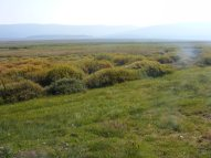 Union Park, an expanse of sagebrush, grasses and willow