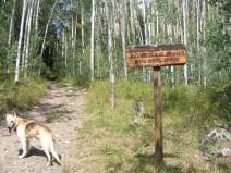 Draco at the beginning of Gunnison National Forest Road 771.1C